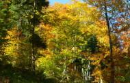 Podzimní tůra z Dalova přes Modrou studánku do Šternberka