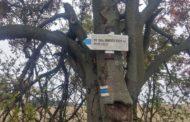 Kontrola 28 km trasy Šternberského vandru přes Těšíkovskou kyselku